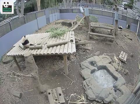 Panda2180225