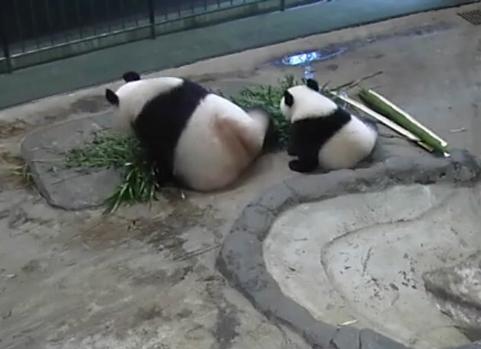 Pandafa3