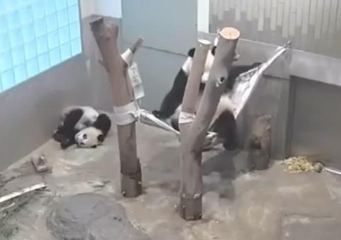 Pandafa4